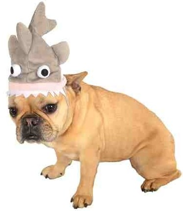 Dog Hat + 49 More Gift Ideas Under 5 Dollars