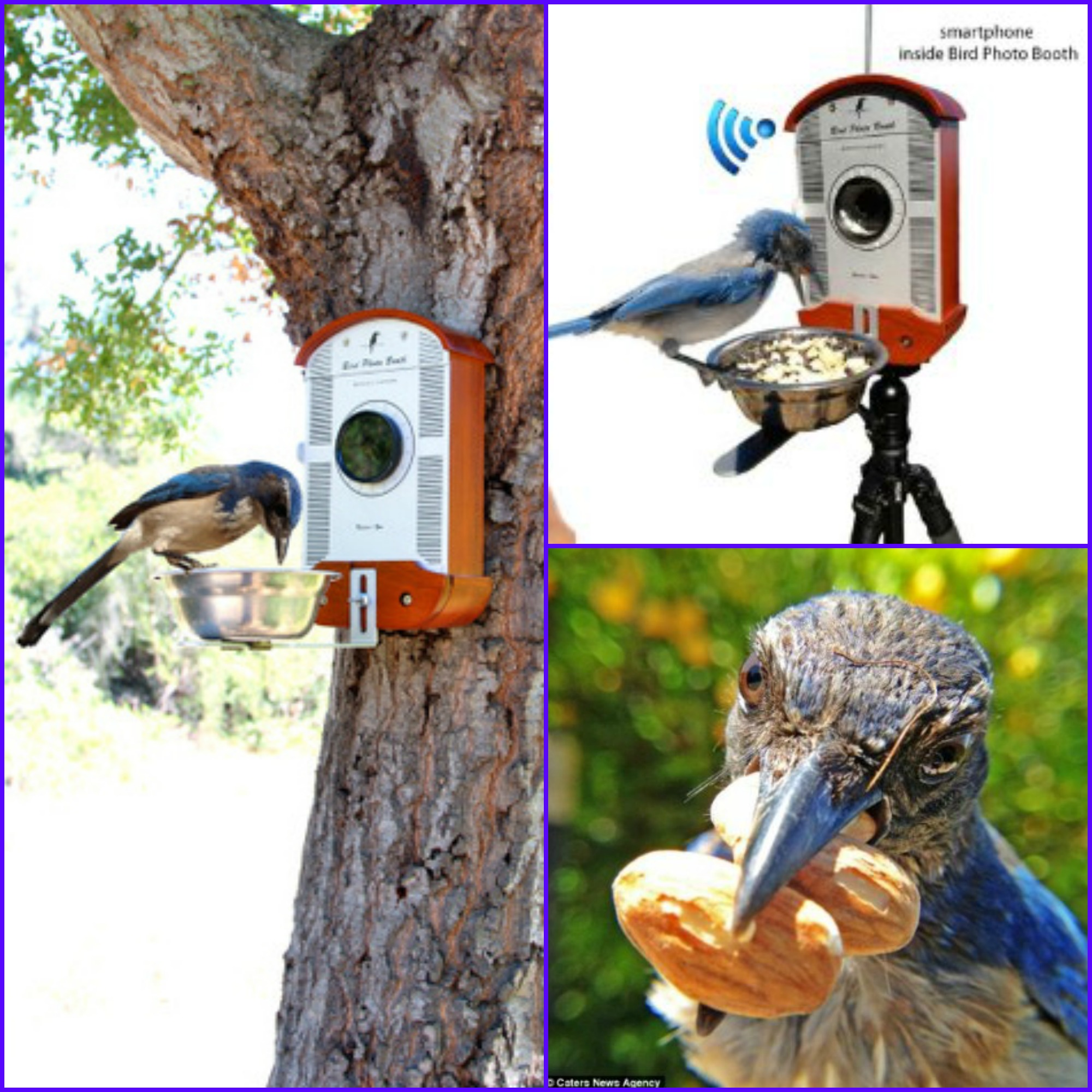 Gift Ideas for Bird Lovers and Bird