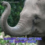 Elephant-Themed Gift Ideas for Elephant Lovers