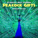 12 Coolest, Most Stunning Peacock Gifts