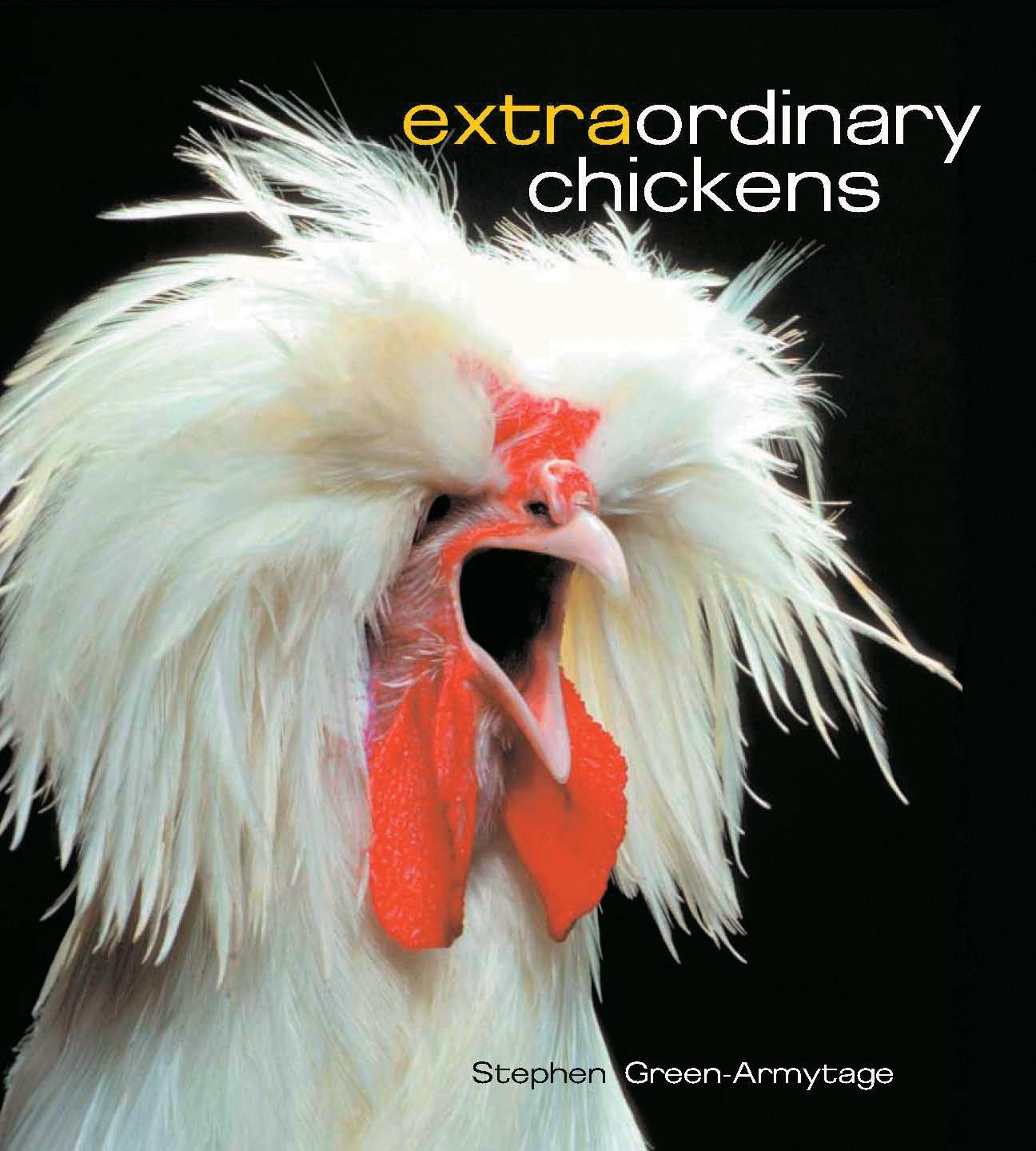 Extraordinary Chickens! It looks like I just found Adam Duritz's pet chicken.